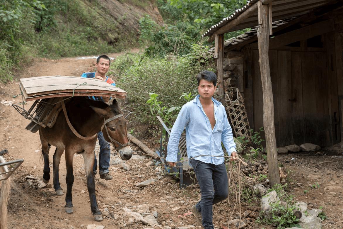 Fertile Soil - Using Donkeys to transport goods in China